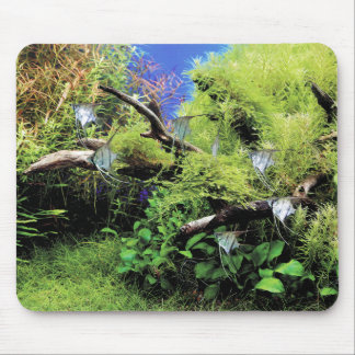 Young Freshwater Angelfishes Mouse Pad