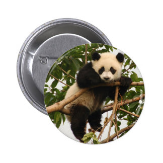 Young giant panda 2 inch round button