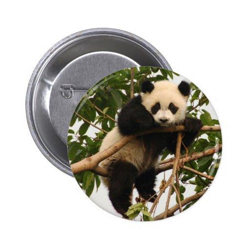 Young giant panda pin