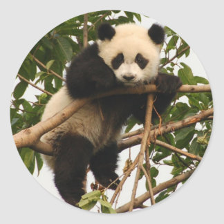 Young giant panda classic round sticker