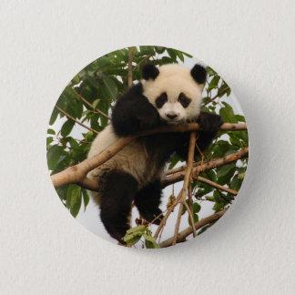 Young giant panda pinback button