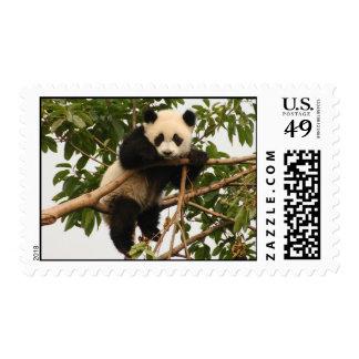 Young giant panda postage