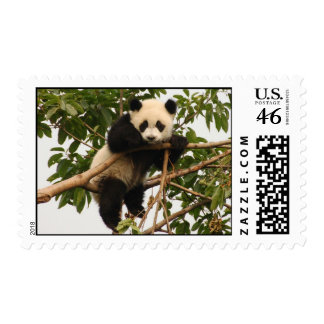 Young giant panda postage stamps