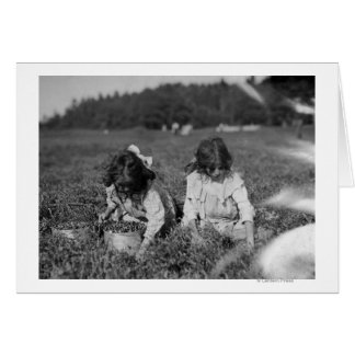 Young Girls Picking Cranberries Photograph Cards