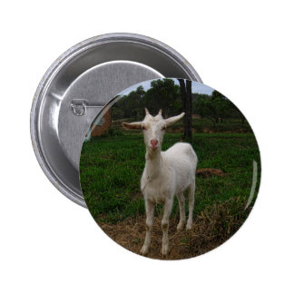 Young Goat Buttons