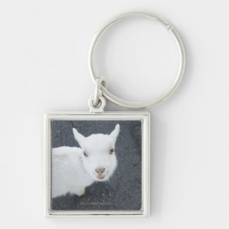 Young goat keychain