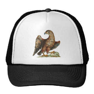Young Golden Eagle - Aquila chrysaetos Hats