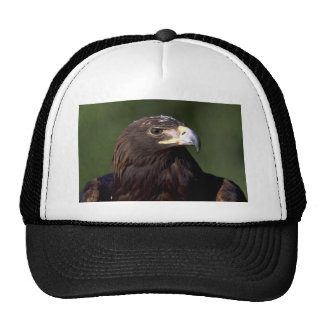 Young golden eagle trucker hat