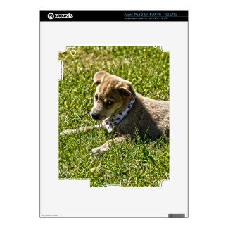 Young Golden Furred Puppy Pet-lover Gift iPad 3 Skins