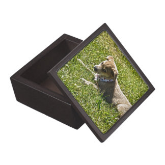 Young Golden Furred Puppy Pet-lover Gift Premium Trinket Box