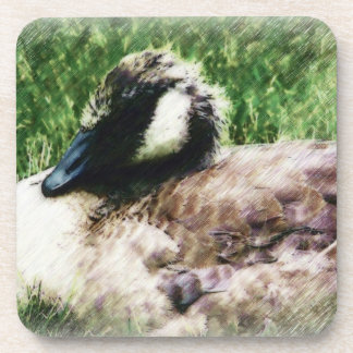 Young Goose - Sketched Drawing Drink Coaster