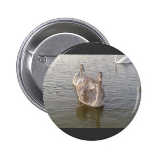 Young Gray Swans 2 Inch Round Button