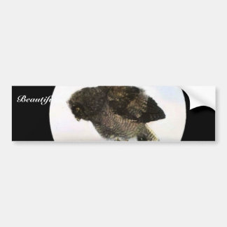 Young Great horned owl Car Bumper Sticker