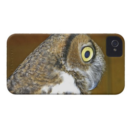 Young great horned owl indoors Case-Mate blackberry case
