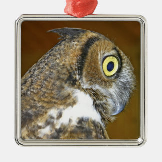 Young great horned owl indoors christmas ornament