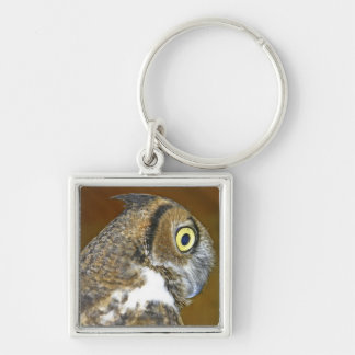 Young great horned owl indoors key chain