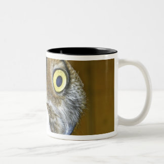 Young great horned owl indoors mug