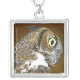 Young great horned owl indoors pendants
