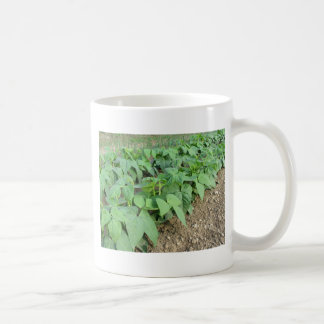 Young green beans plants in rows coffee mug