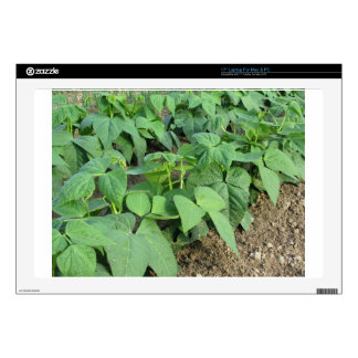 """Young green beans plants in rows in the garden 17"""" laptop decal"""