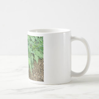 Young green beans plants in rows in the garden coffee mug