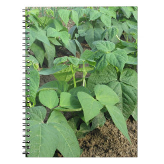Young green beans plants in rows in the garden notebook