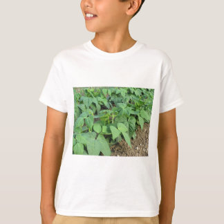 Young green beans plants in rows in the garden T-Shirt