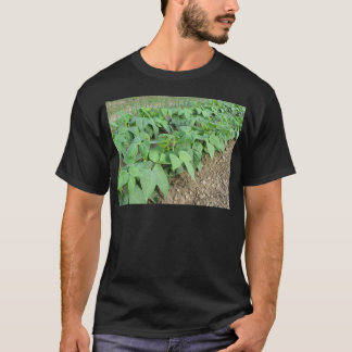 Young green beans plants in rows T-Shirt