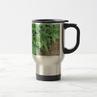 Young green beans plants in rows travel mug
