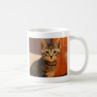 Young Grey Kitty Cat Classic White Coffee Mug