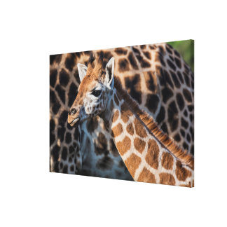 Young Griaffe by its mother Canvas Print