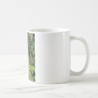 Young Grizzly Bear in a tree Classic White Coffee Mug