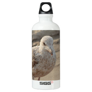 young gull on the beach aluminum water bottle