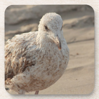 young gull on the beach beverage coaster
