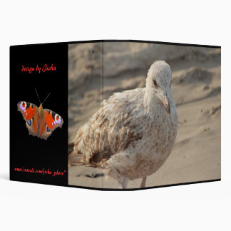 young gull on the beach binder