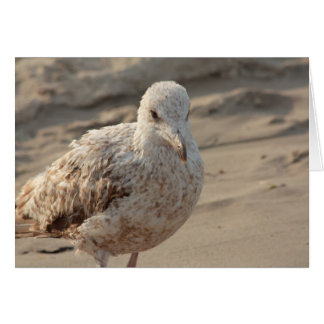 young gull on the beach card