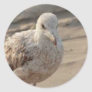 young gull on the beach classic round sticker