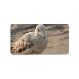 young gull on the beach label