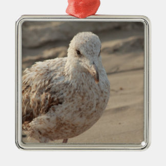 young gull on the beach metal ornament