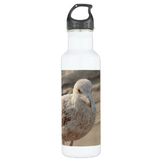 young gull on the beach water bottle