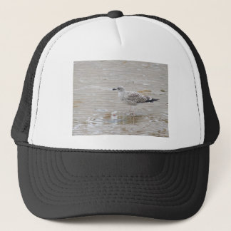 Young Gull Trucker Hat