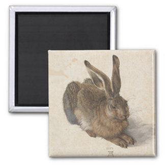 Young Hare by Albrecht Durer 2 Inch Square Magnet