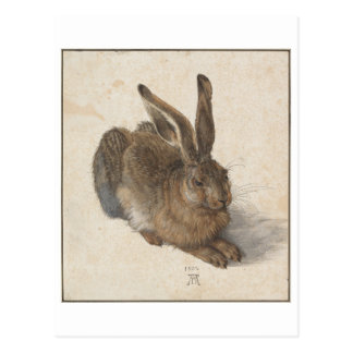 Young Hare by Albrecht Durer Postcards