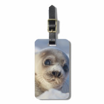 Young Harp Seal Luggage Tag