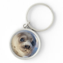 Young harp seal starting to shed its coat keychain