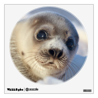 Young harp seal starting to shed its coat wall sticker
