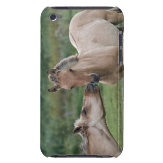 Young Henson horses encountering each other Case-Mate iPod Touch Case