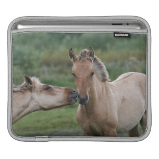 Young Henson horses encountering each other iPad Sleeve