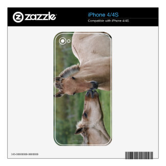 Young Henson horses encountering each other iPhone 4 Decal