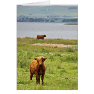 Young Highland Cow by Scottish Loch Greeting Card